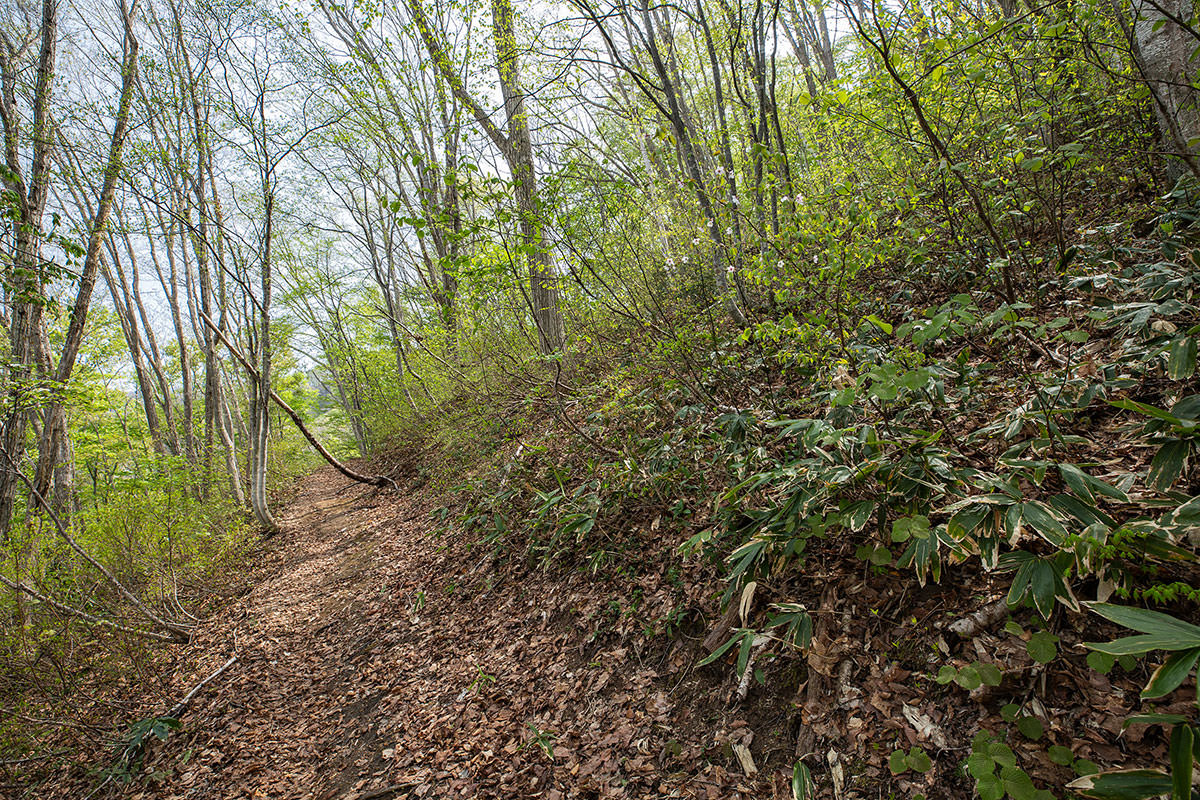 【斑尾山 菅川】登山百景-新緑の中を歩く