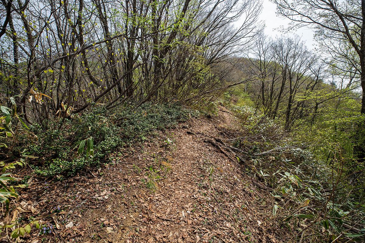 【斑尾山 菅川】登山百景-傾斜が緩くなった