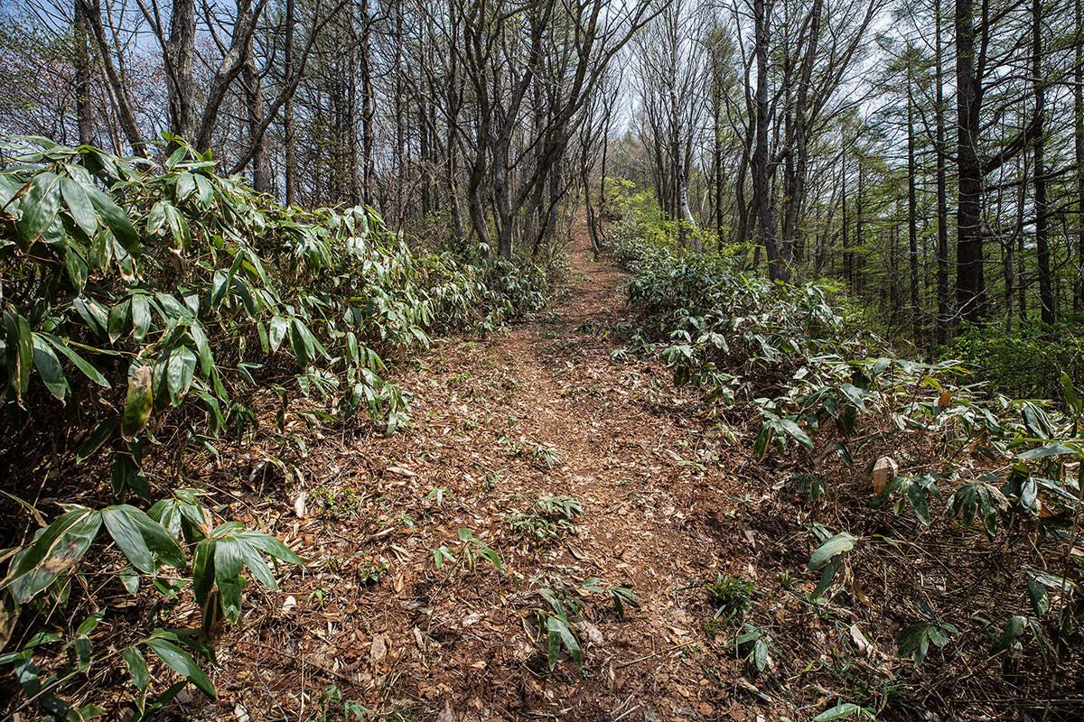 【斑尾山 菅川】登山百景-広く歩きやすくなった