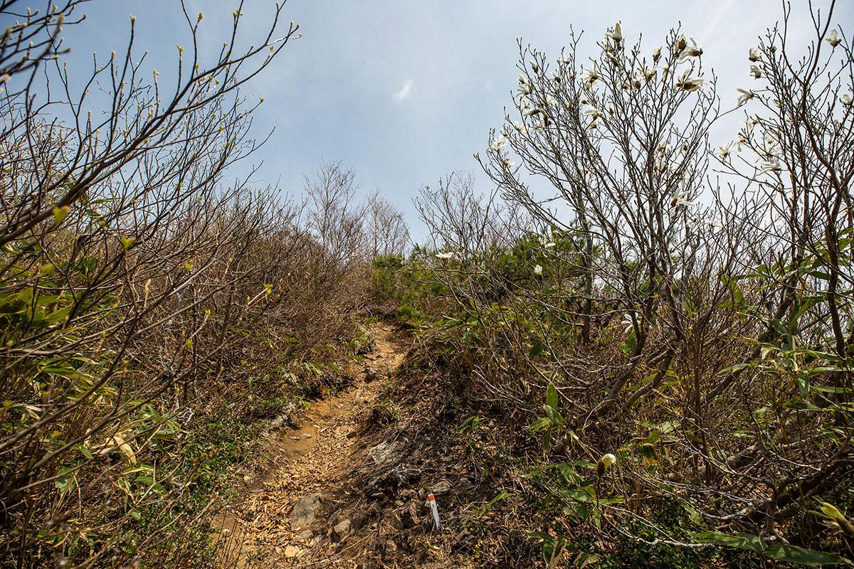 【斑尾山】登山百景-木が開けた