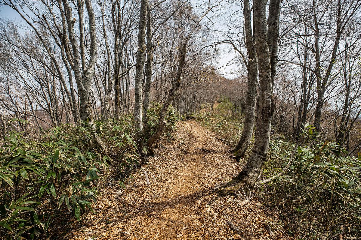 【斑尾山】登山百景-尾根を山頂へ