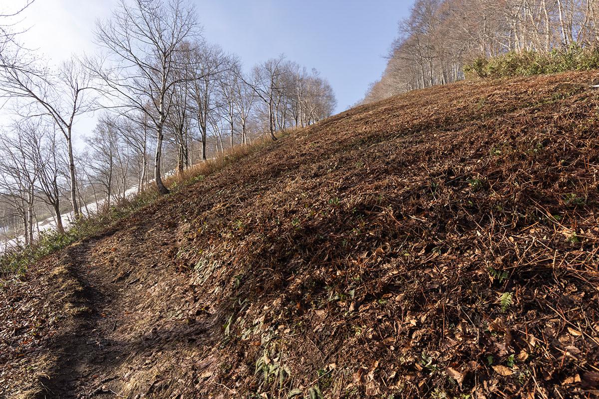 なかなかの急斜面を踏み跡に沿って登る