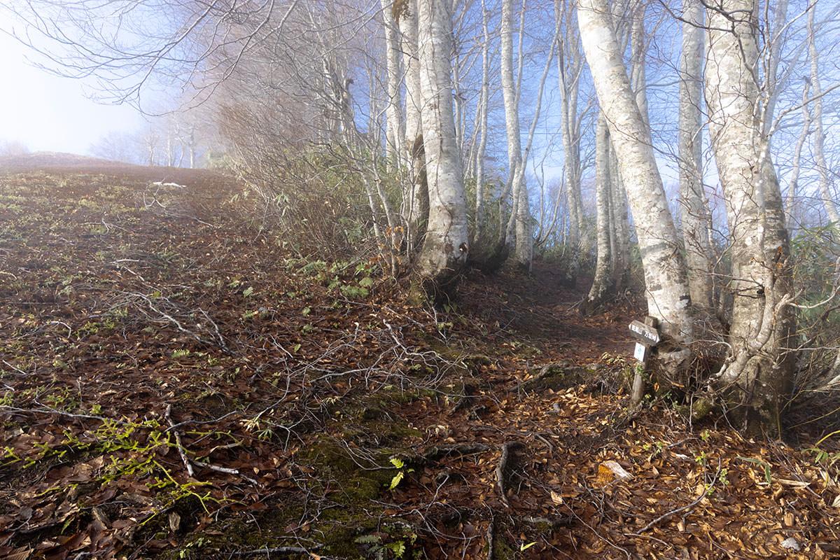ゲレンデから林の中へ入る