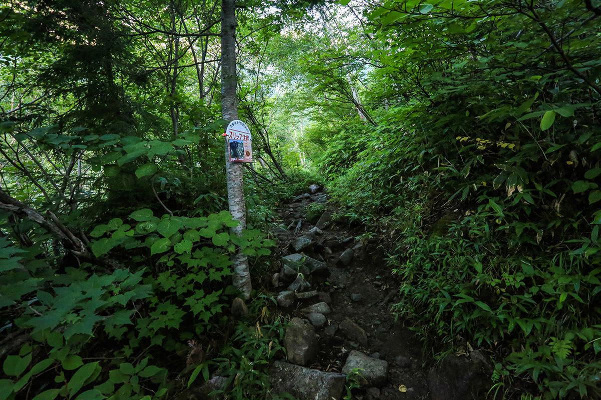 【前穂高岳】登山百景-また木の中を歩く