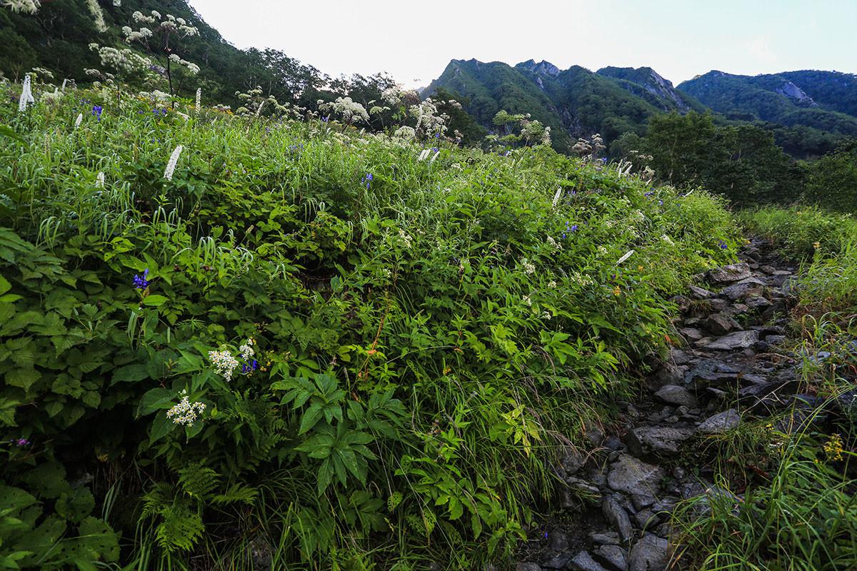 【前穂高岳】登山百景-花がいっぱい