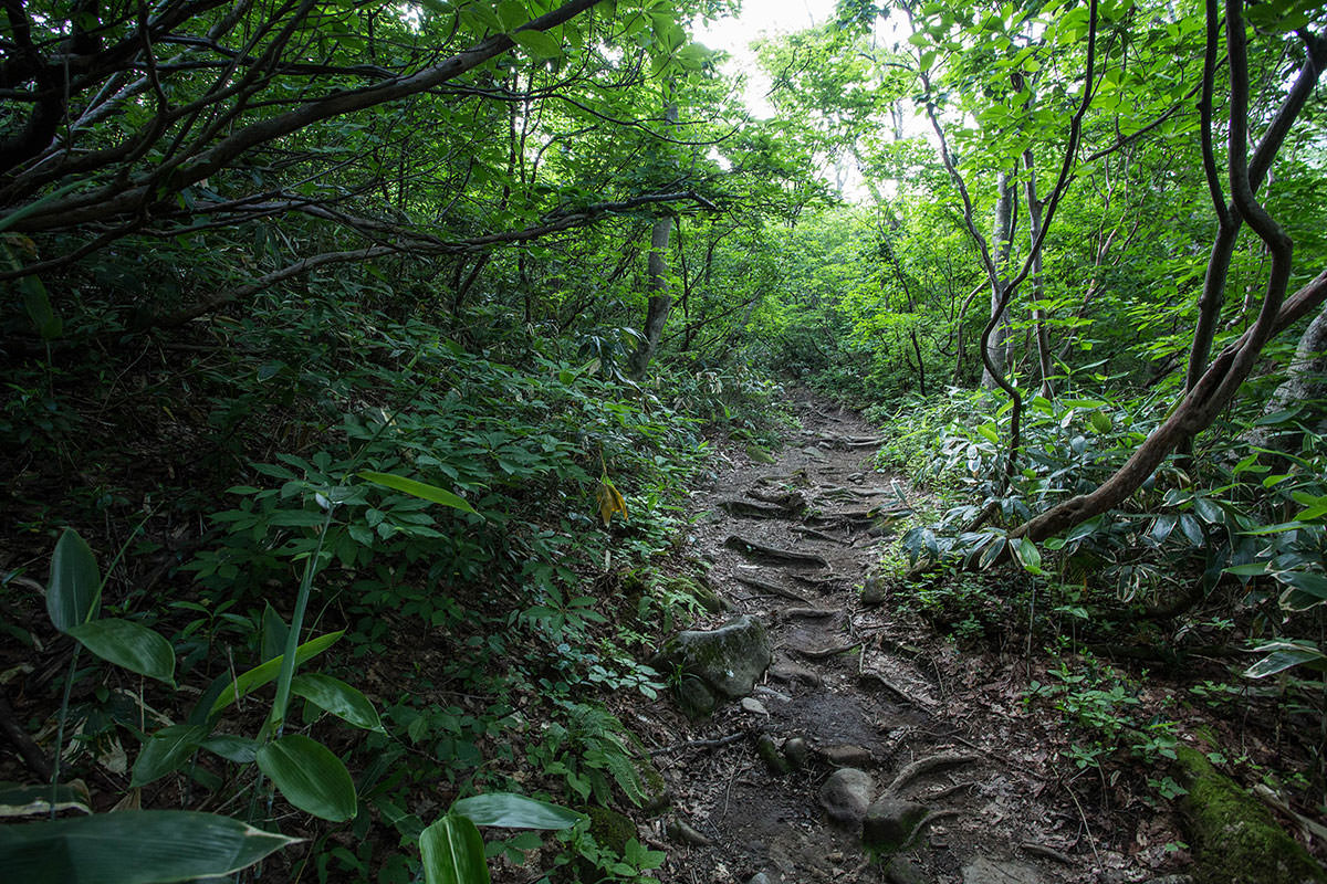【巻機山】登山百景-緑がいっぱい