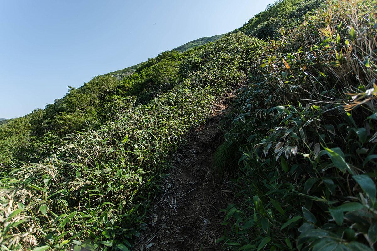 【巻機山】登山百景-笹の登り坂
