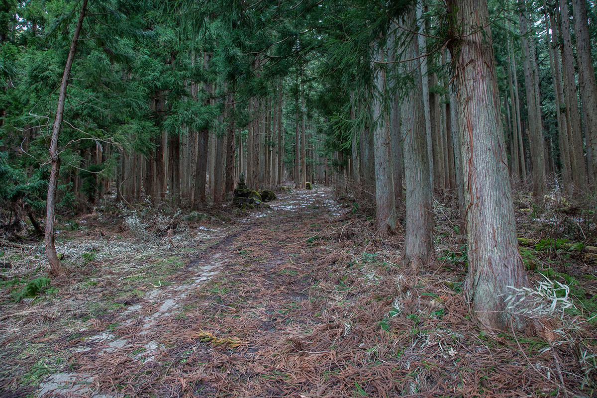 【万仏山】登山百景-林道を歩く