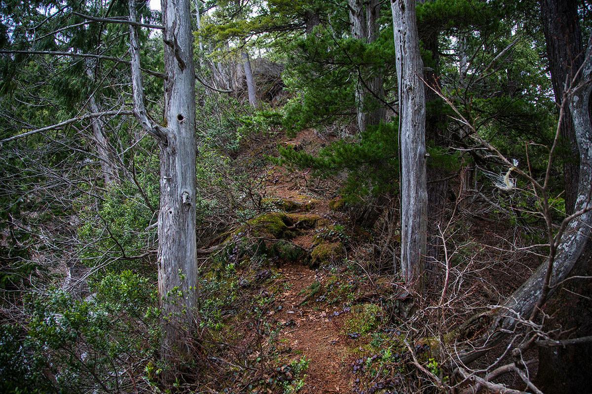 【万仏山】登山百景-狭い尾根が続く