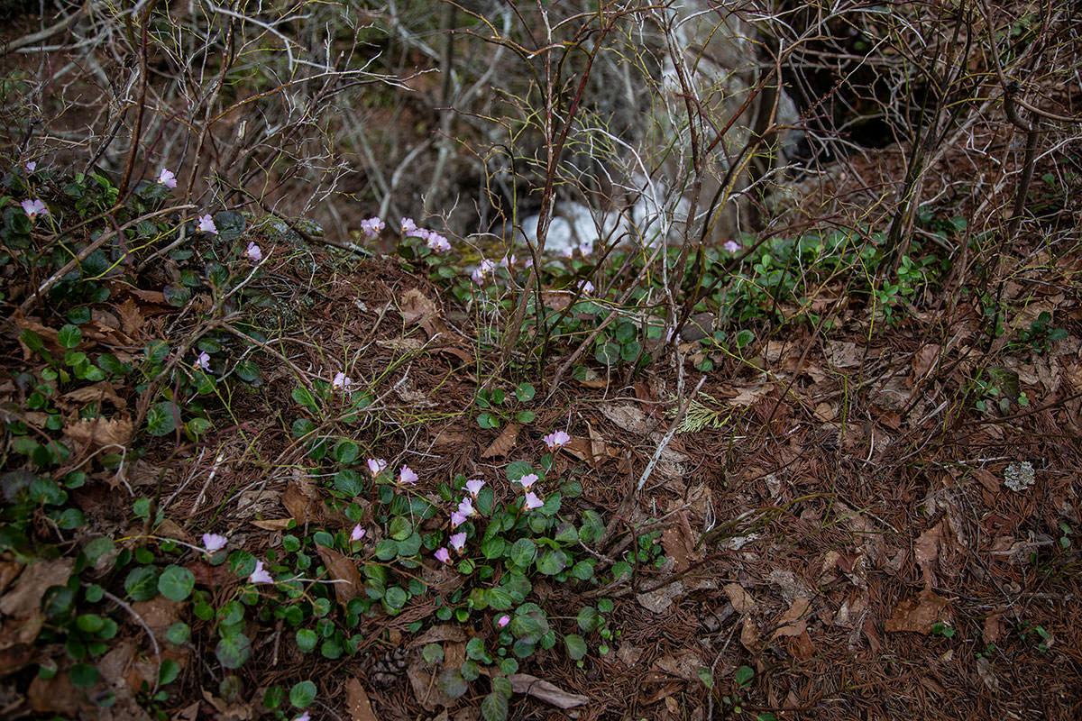 【万仏山】登山百景-花がいっぱい