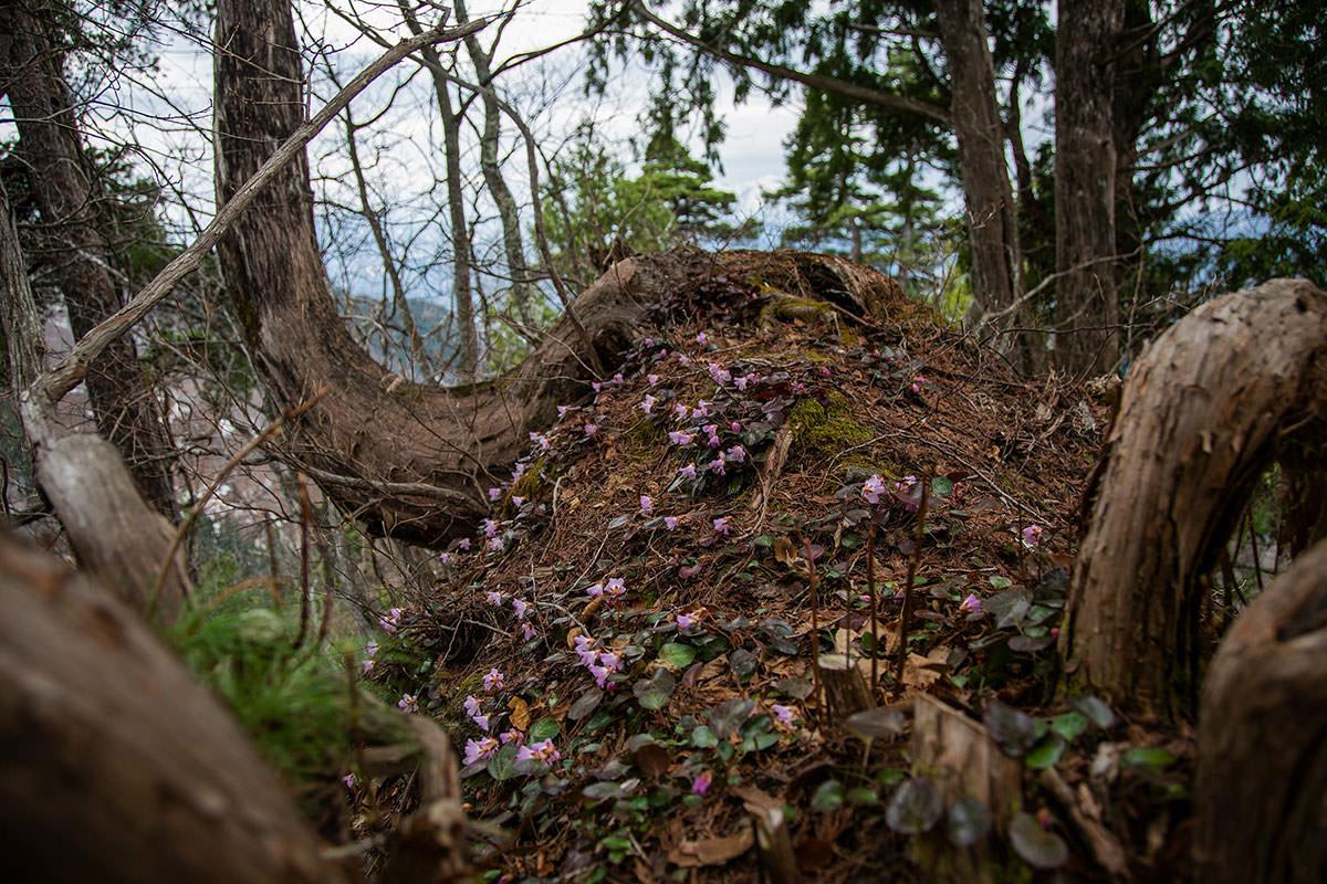 【万仏山】登山百景-まるで花の上を歩くよう