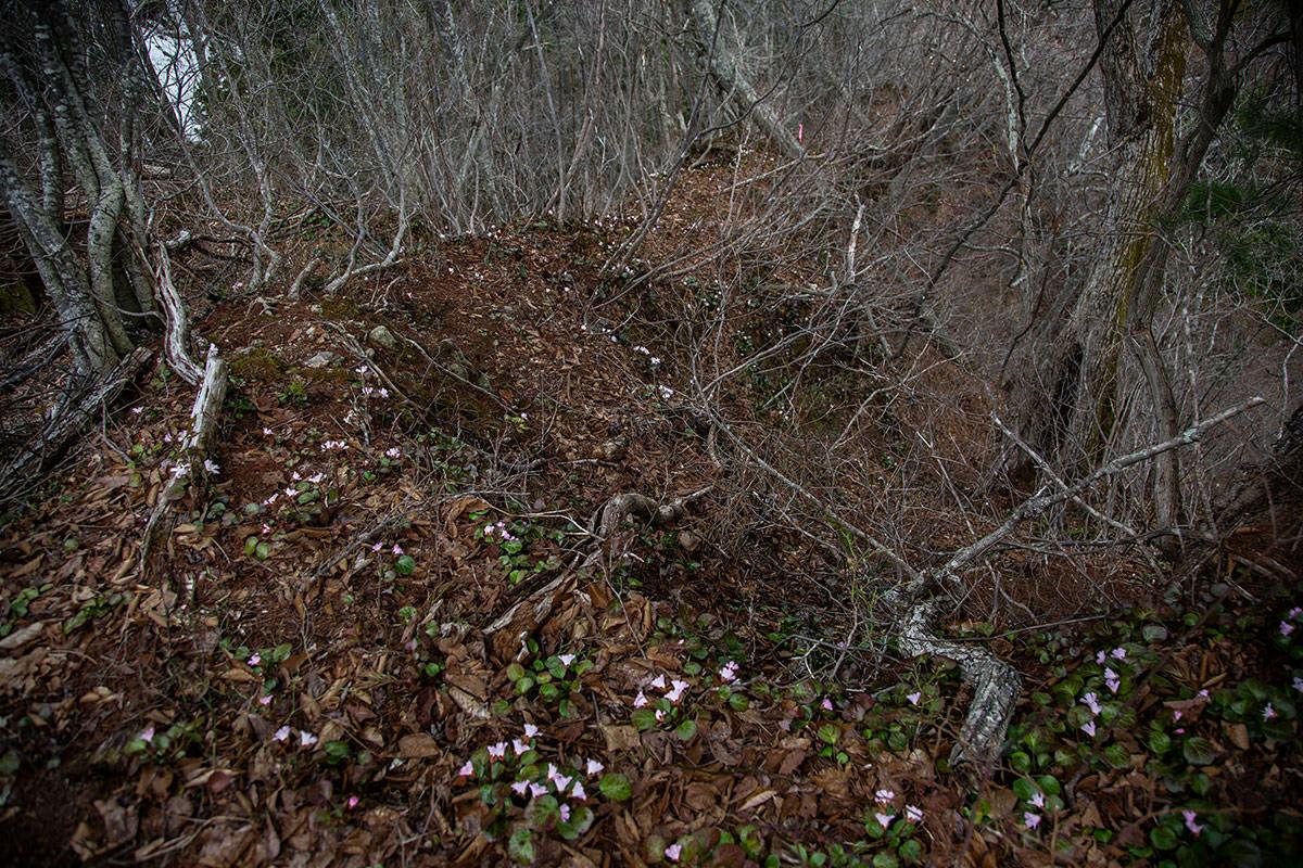 【万仏山】登山百景-下り坂にも花