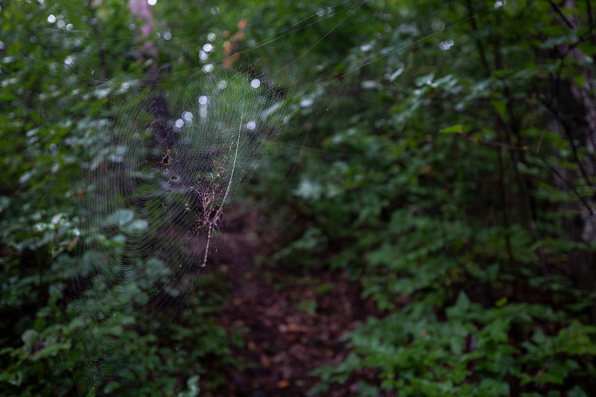 クモの巣もいっぱい