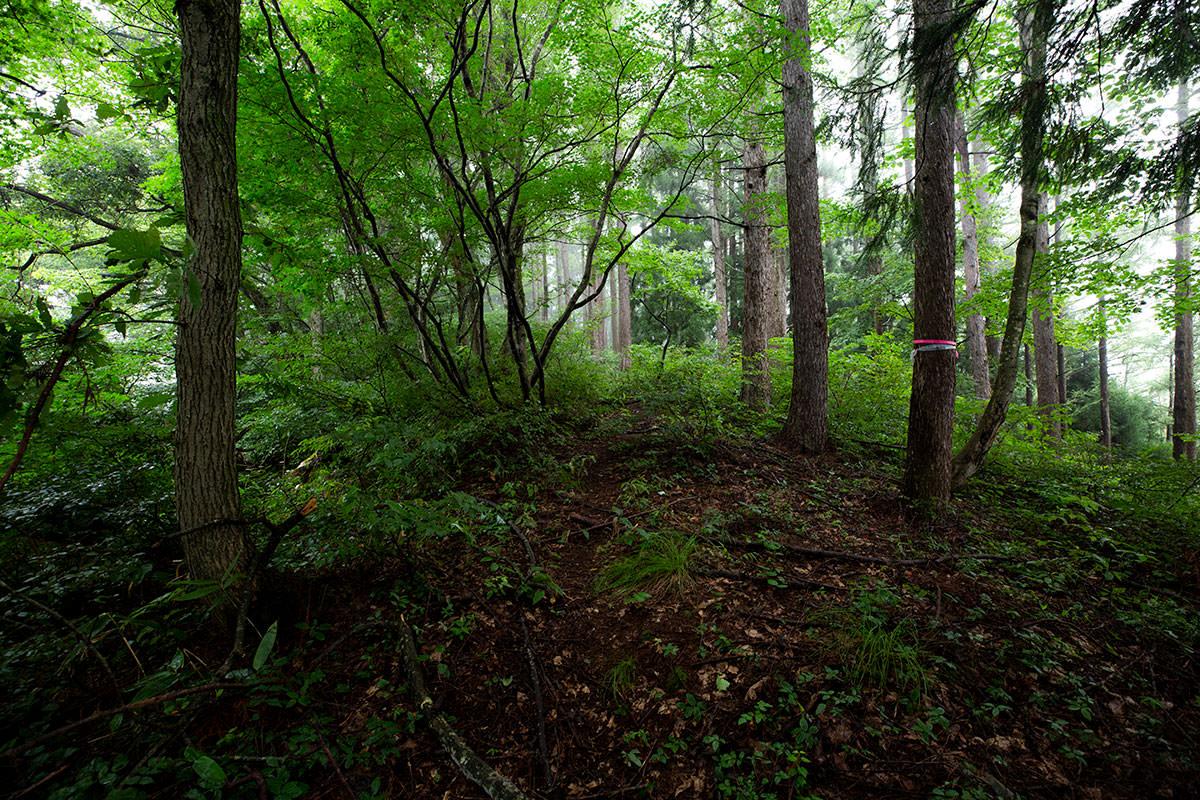 林の中では藪が薄め