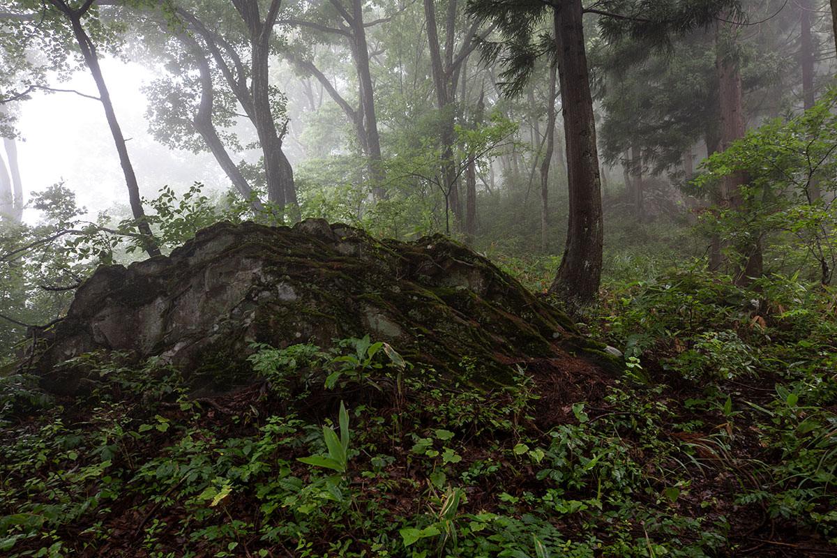 巨石がたくさん埋まっている