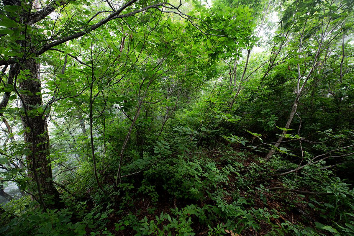 藪の登り坂がキツい