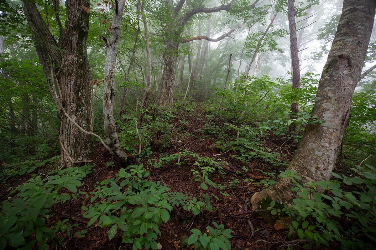 ブナが増えて藪は落ち着いた感じ