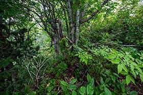 細尾根の上でも草木は生える