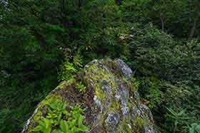 平均台のような石の上は湿気た苔