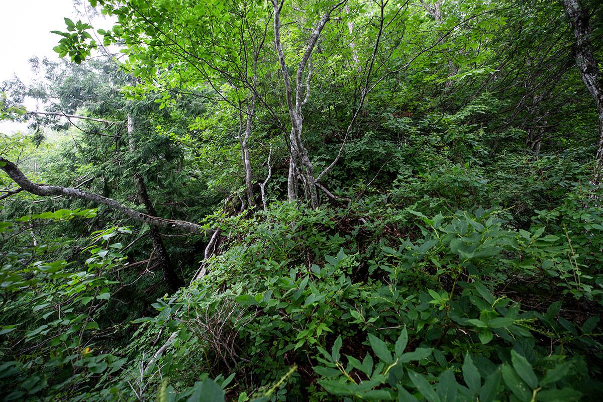 さらに草と木がボーボーの急斜面へ