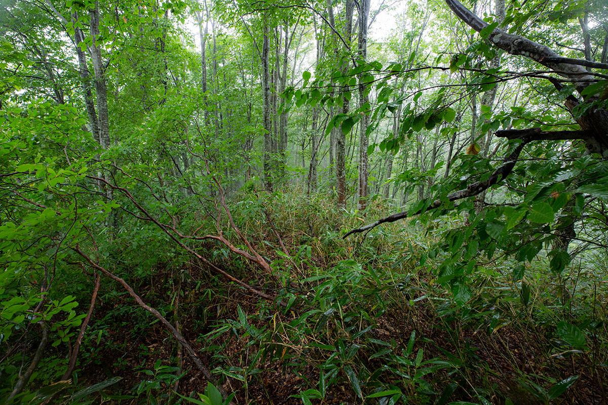 この先の藪も進めそうな雰囲気