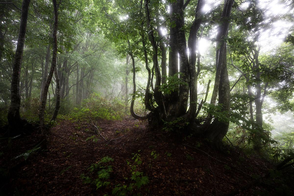 周りはとても深いブナの森
