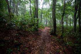 小菅山からはおだやかな登山道