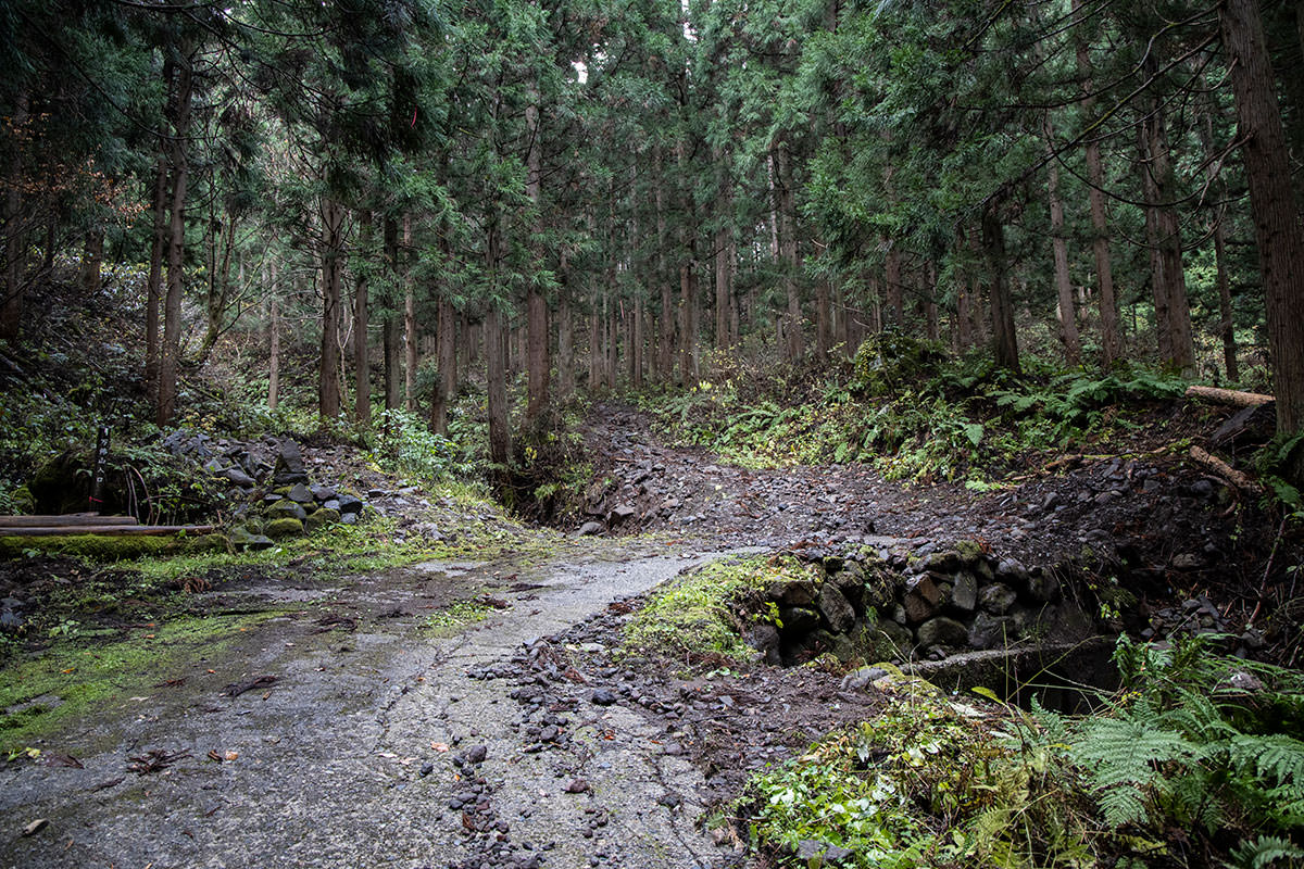 ここから登山道へ入っていく