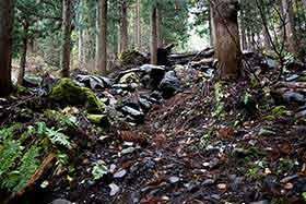 大きな倒木が登山道を塞いでいる
