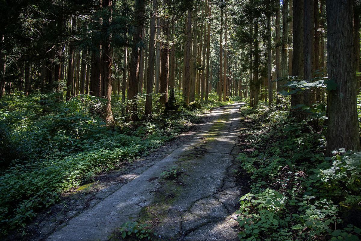 登山口まで林道を歩く