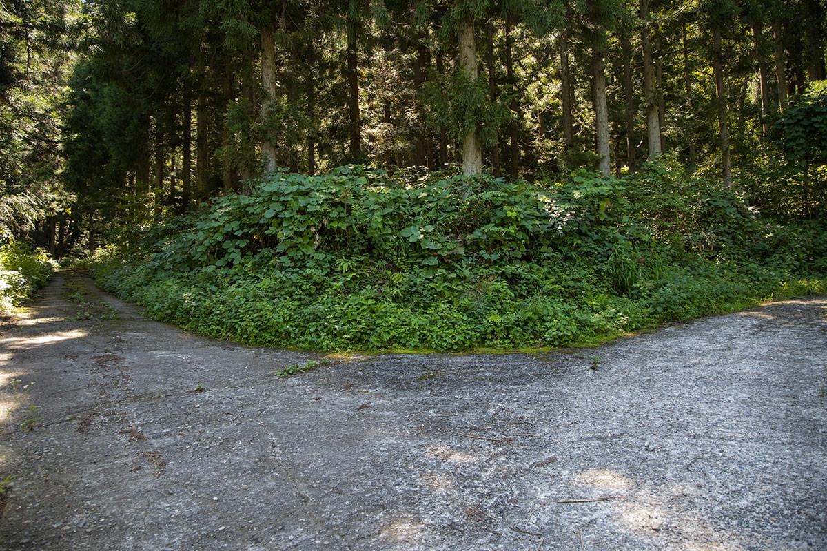 林道の分岐を右へ