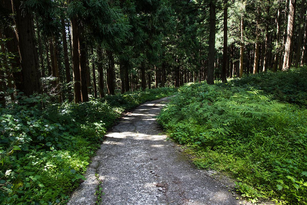 車を停めたところまで林道を歩く