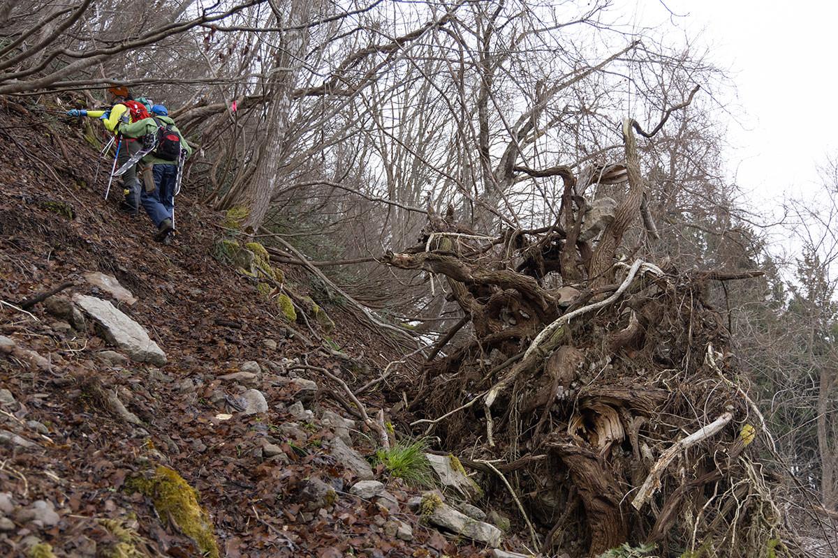 万仏山-ガレ場的な場所の上には倒木