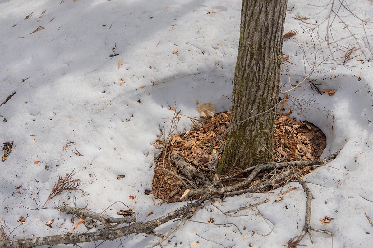 万仏山-雪は木の周りから溶けている感じ