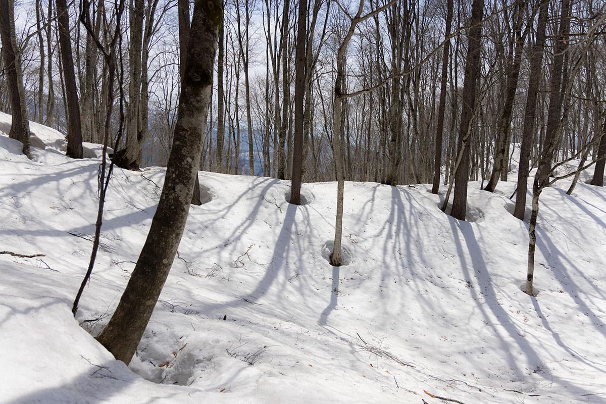 万仏山-木の周りは雪が解けている
