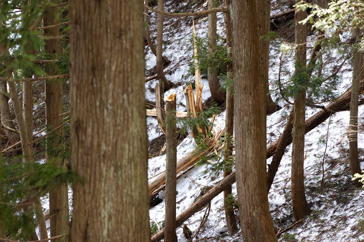 万仏山-あちこちで木が折れてる