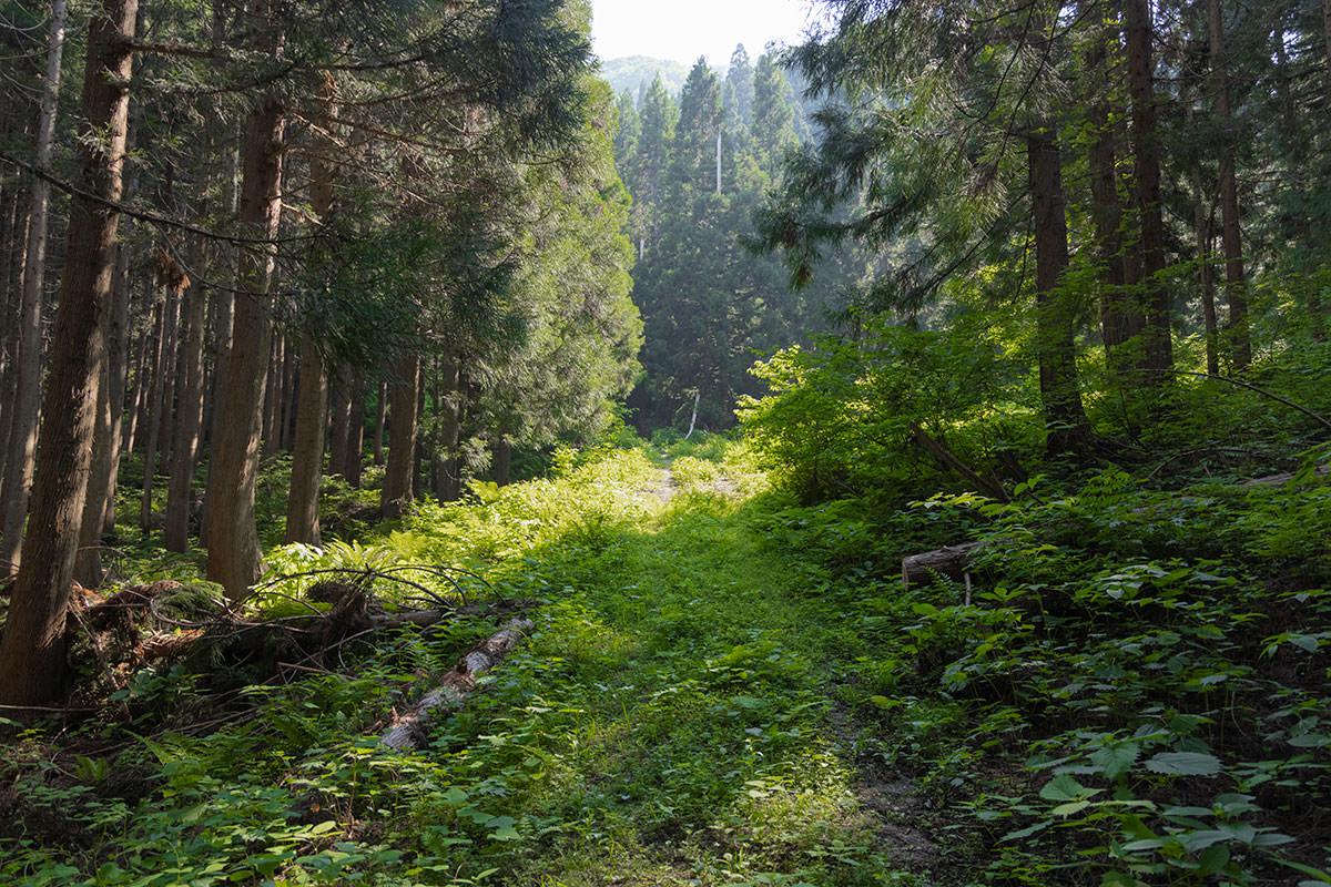 万仏山-登山口まで草の生えた道路を少し歩く