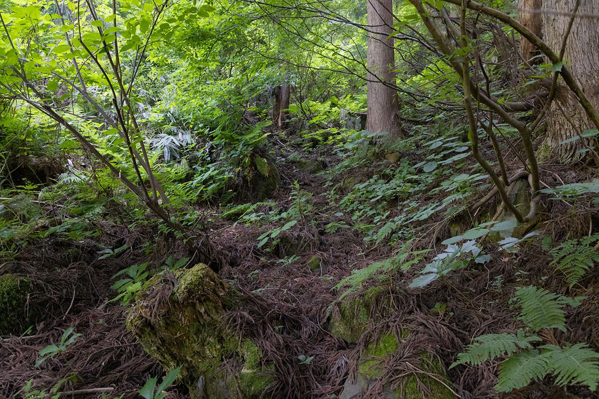 万仏山-杉の葉を踏むとクッションになってて良い
