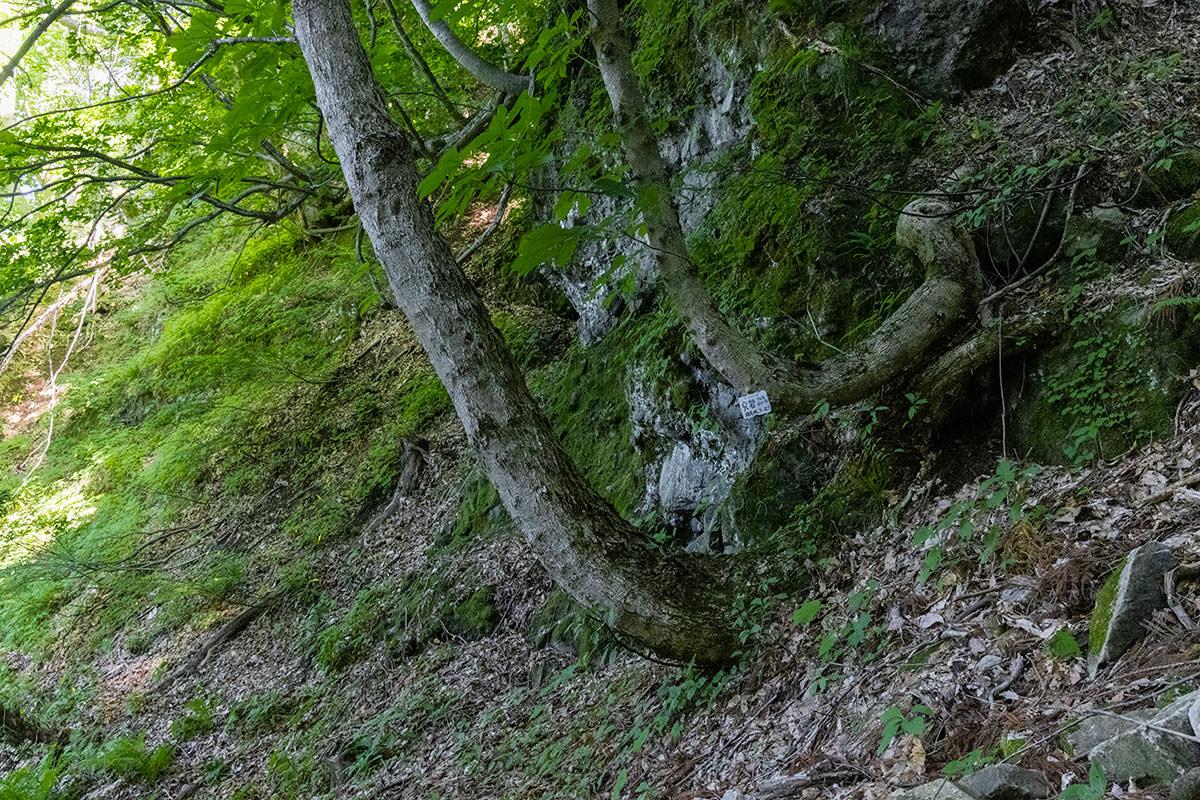 万仏山-向こうには穴岩