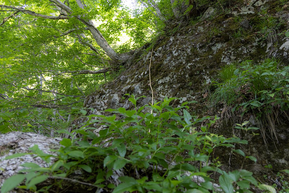 万仏山-次のロープは左側が深く落ちている