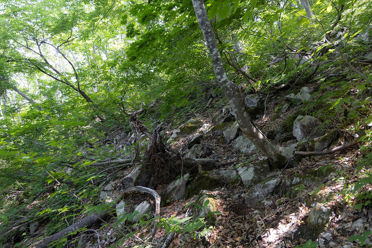 万仏山-岩の多い登山道に変わった
