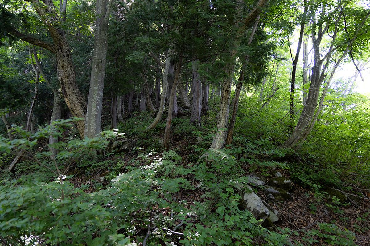 万仏山-深い緑の中を登る