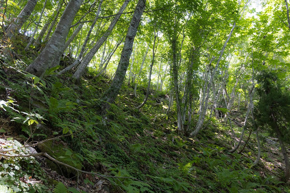万仏山-尾根上に見える緑が綺麗