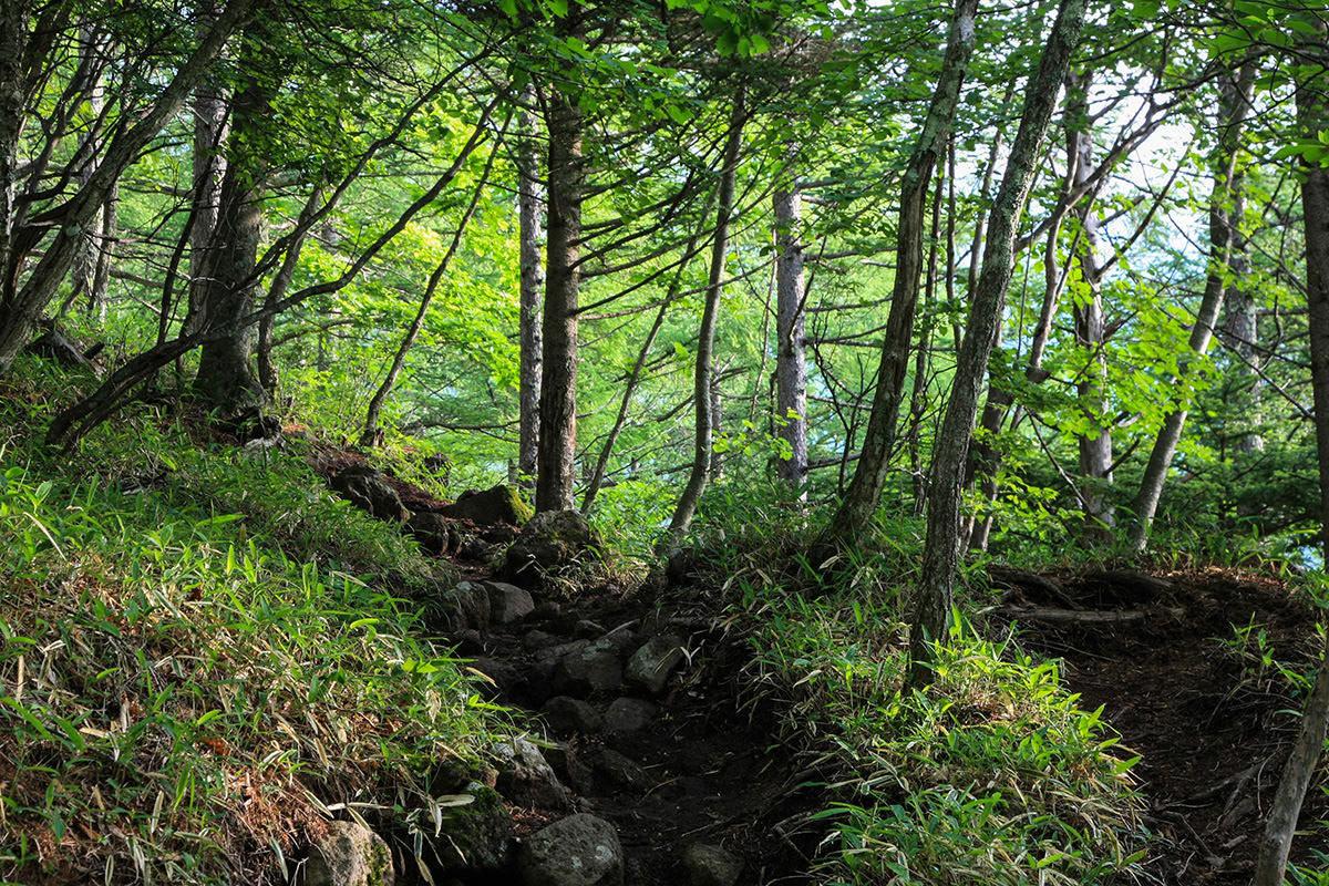 【南八ヶ岳 南北縦走】登山百景-緑に囲まれて歩く