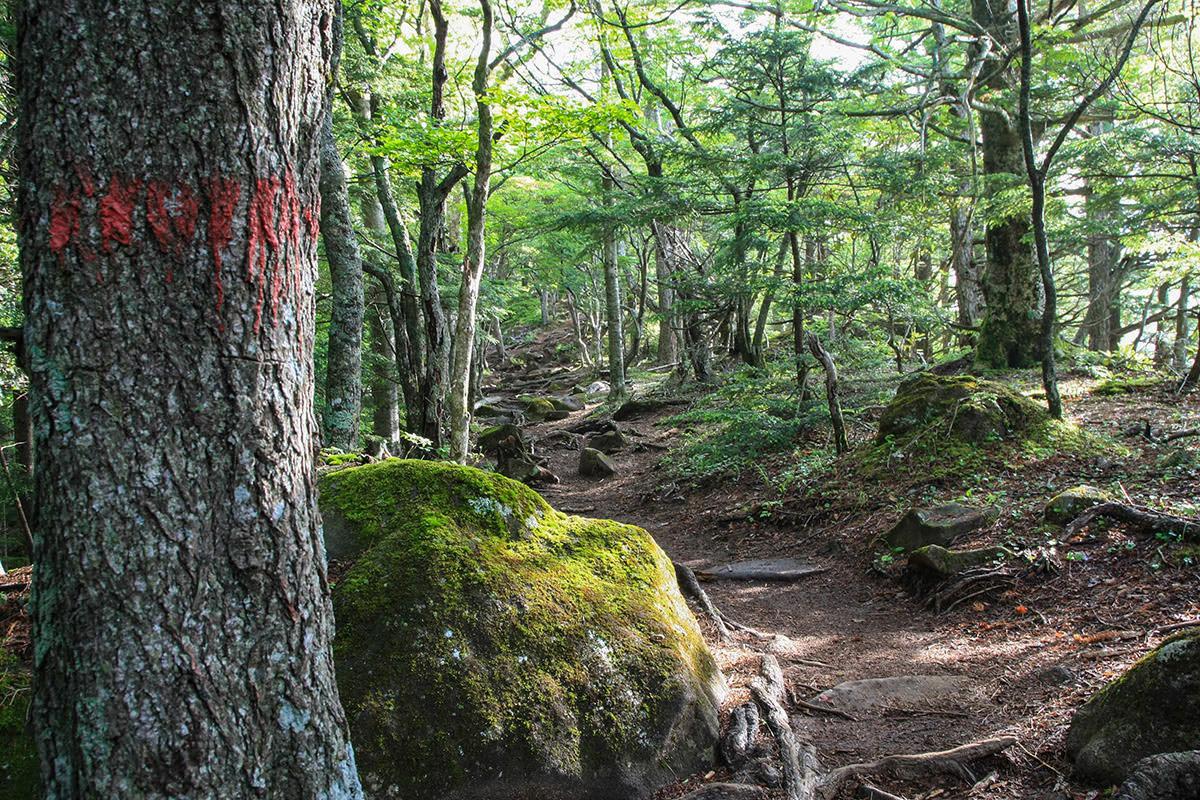 【南八ヶ岳 南北縦走】登山百景-岩の多い登山道