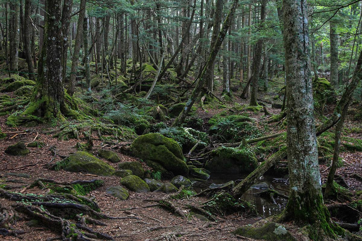 【南八ヶ岳 南北縦走】登山百景-苔の緑が印象的