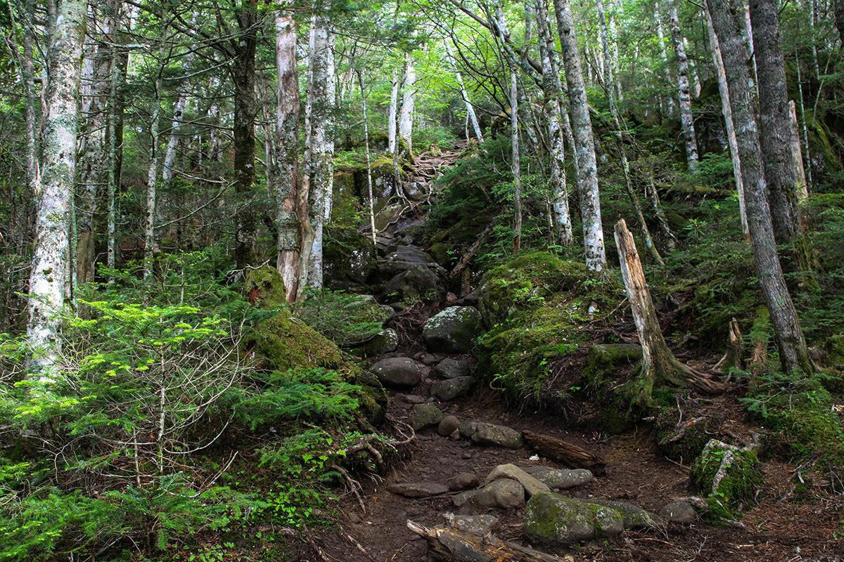 【南八ヶ岳 南北縦走】登山百景-押手川から勾配はきつく