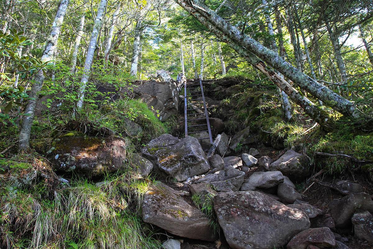 【南八ヶ岳 南北縦走】登山百景-最初のハシゴは短い