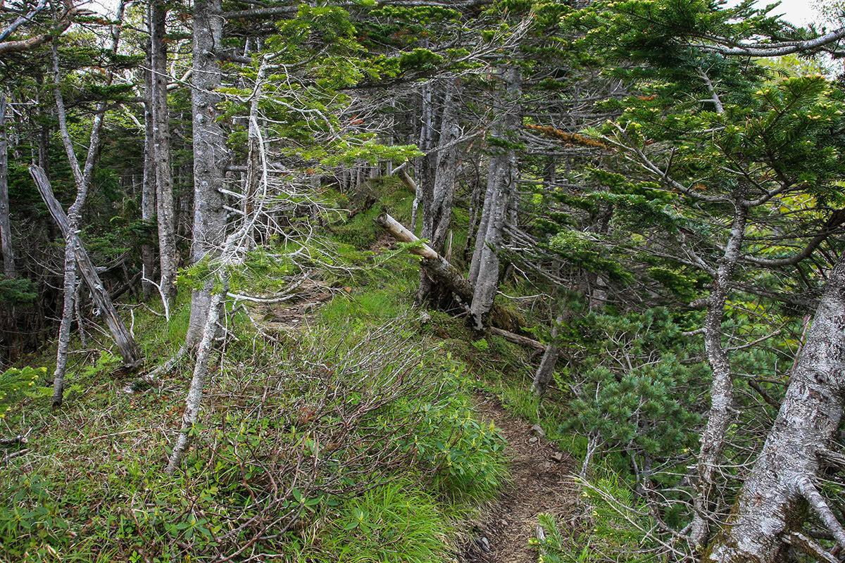 【南八ヶ岳 南北縦走】登山百景-木の中へ