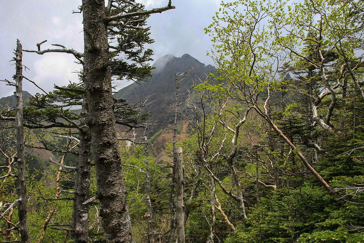 【南八ヶ岳 南北縦走】登山百景-赤岳も木の間